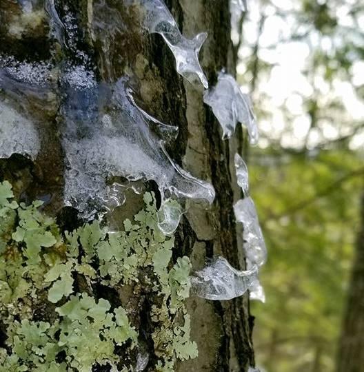 Lichen Ice