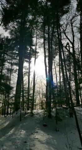 Sun Trees on Wantastiquet