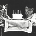 cats with cake