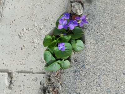 Taste of Sidewalk Spring