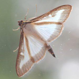Moth on Window